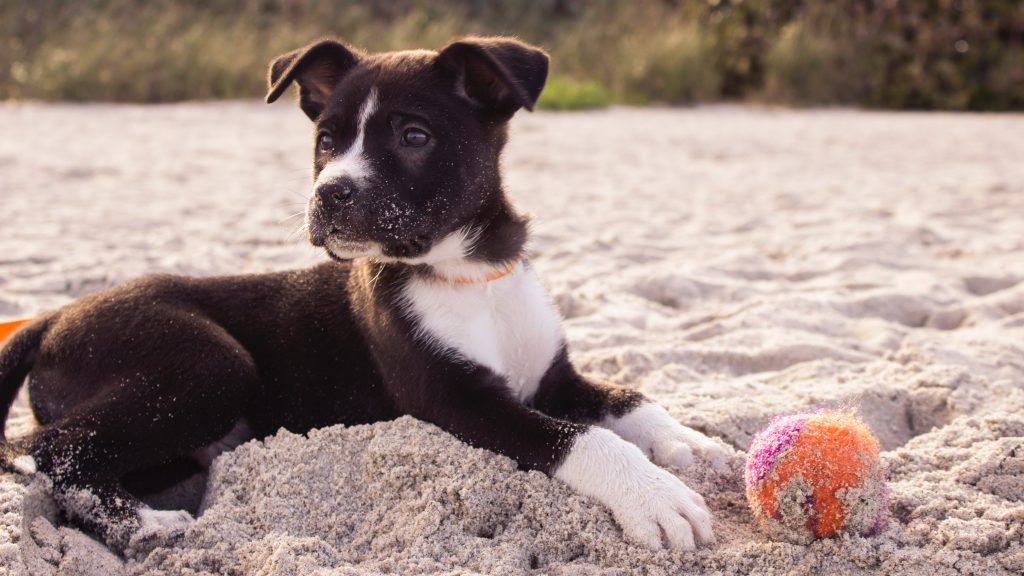 Hund am Strand mit Ball. Foto: Andrew Pons / Unsplash