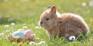 Hase mit Ostereiern im Garten. Foto: Rebekka D / Pixabay