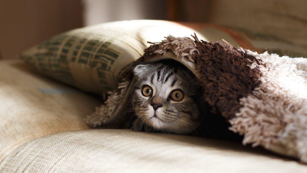 Katze versteckt sich unter einer Decke. Foto: Mikhail Vasilyev / Unsplash